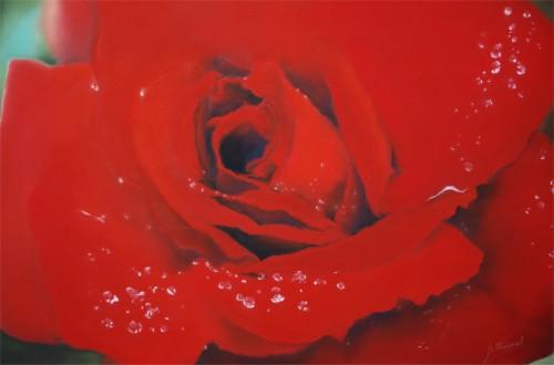Rose Rouge 2012.jpg